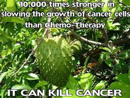 Плодът от Гравиола.