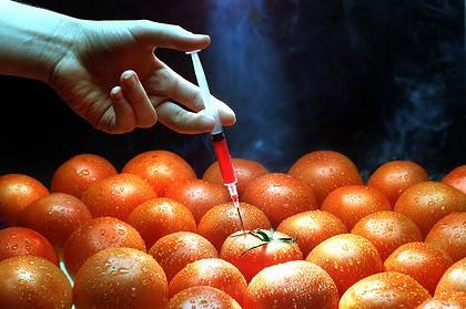 Вижте кой наложи ГМО в България, според доклад на Уикилийкс
