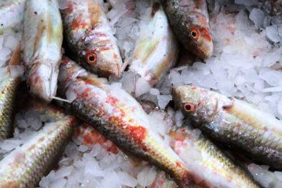 Гнус! Ядем риба, натъпкана с хормони, урина и дори боя!