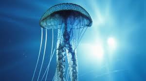 Ето какво помага при опарване от медузи.