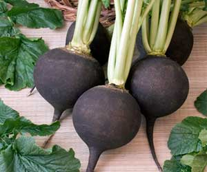 Granny's recipe for the treatment of sore throat and cough with black radish
