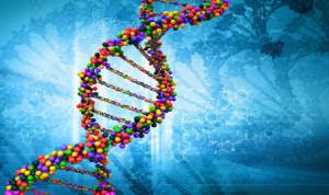 Откриха ген в мозъка, на който се дължи гениалността