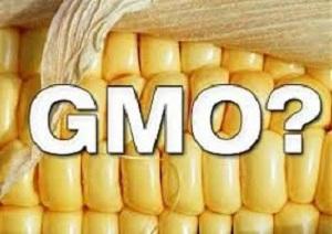 Как да разпознаем ГМО по етикетите при пазаруване?