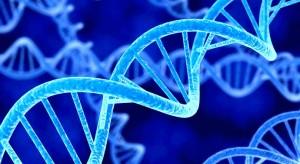 Заболяването Синдром на Леш-Нихан е причинено от недостатъци на ген в хромозома X.