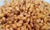 Чудодейна рецепта с покълнала пшеница помага срещу рак и други болести