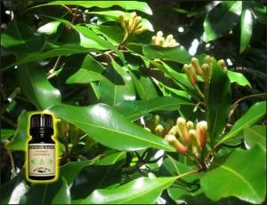 Масло от карамфил се използва за облекчаване на зъбобол