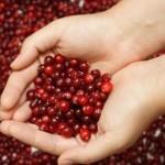 Помогнете си с билки при лечение на цистит - червена боровинка