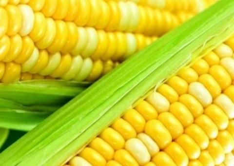 Резултат с изображение за царевица