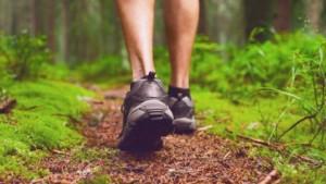 Природата е полезна и за възстановяване и от психично заболяване