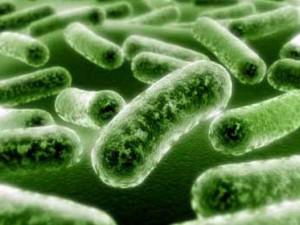 Бактерията хламидия причинява тежко венерическо заболяване