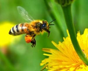Пчелните продукти са полезни за много състояния и болести